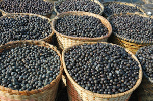 Why Acai Berries Are So Great